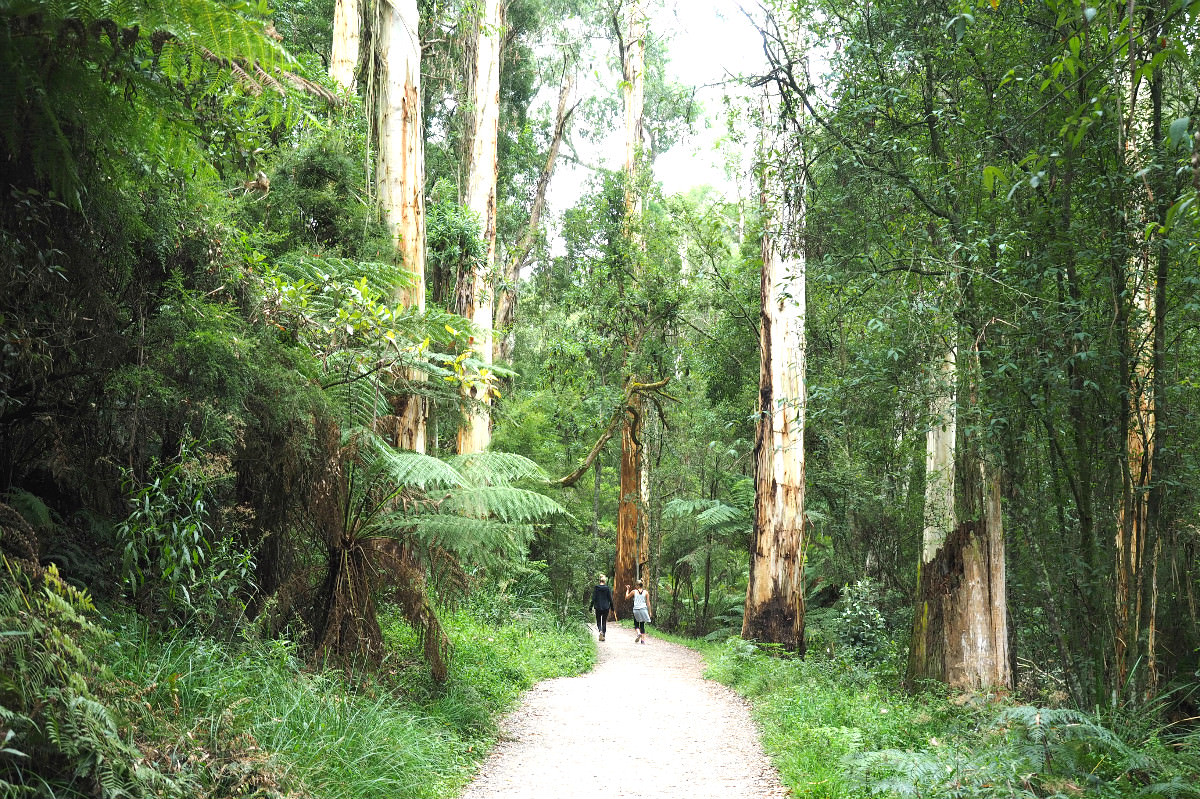 how to get to 1000 steps mt dandenong