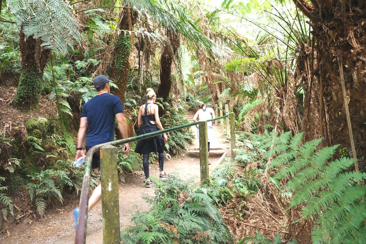 Walking up the 1000 Steps Dandenong