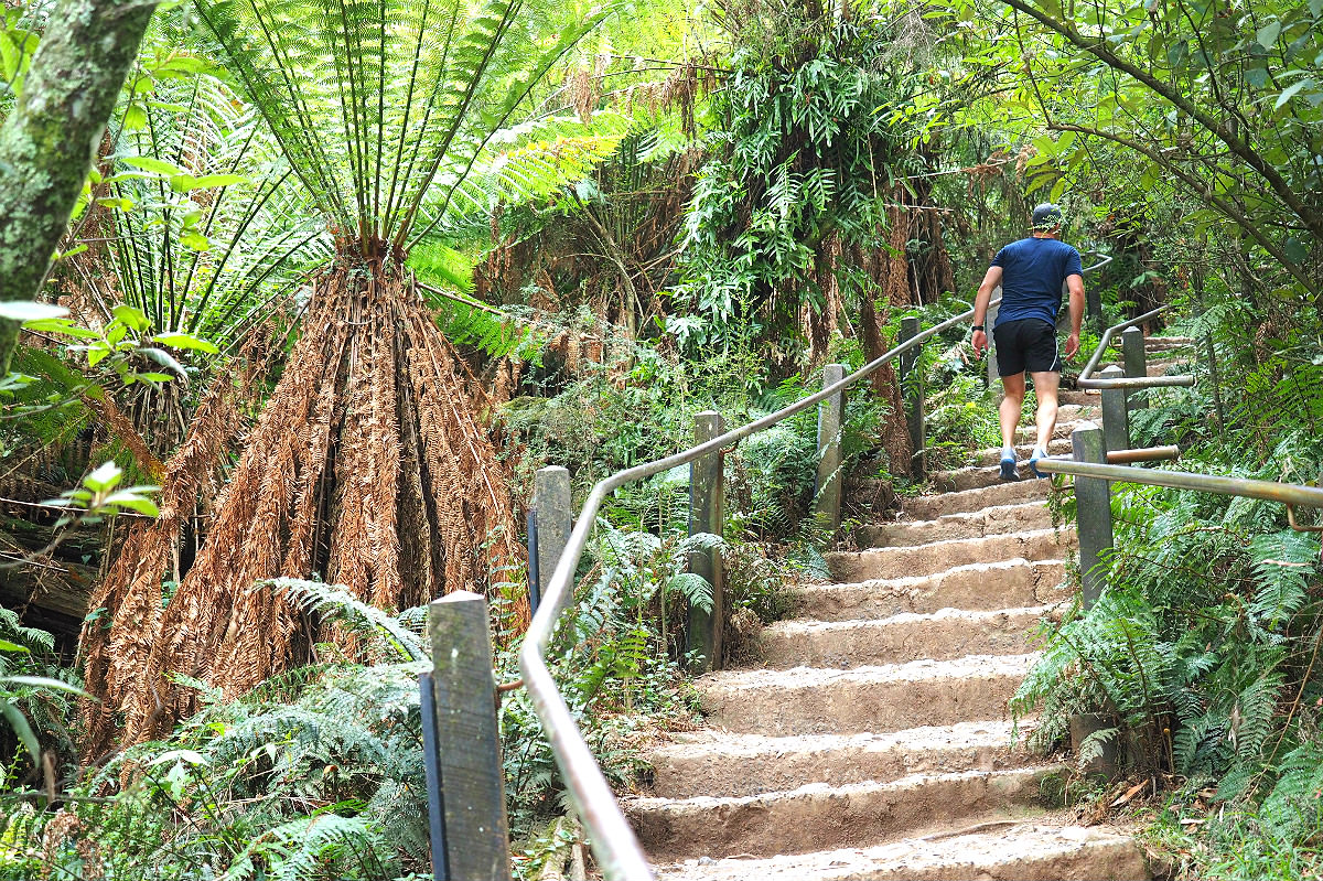 A step section at the 1000 Steps Dandenong