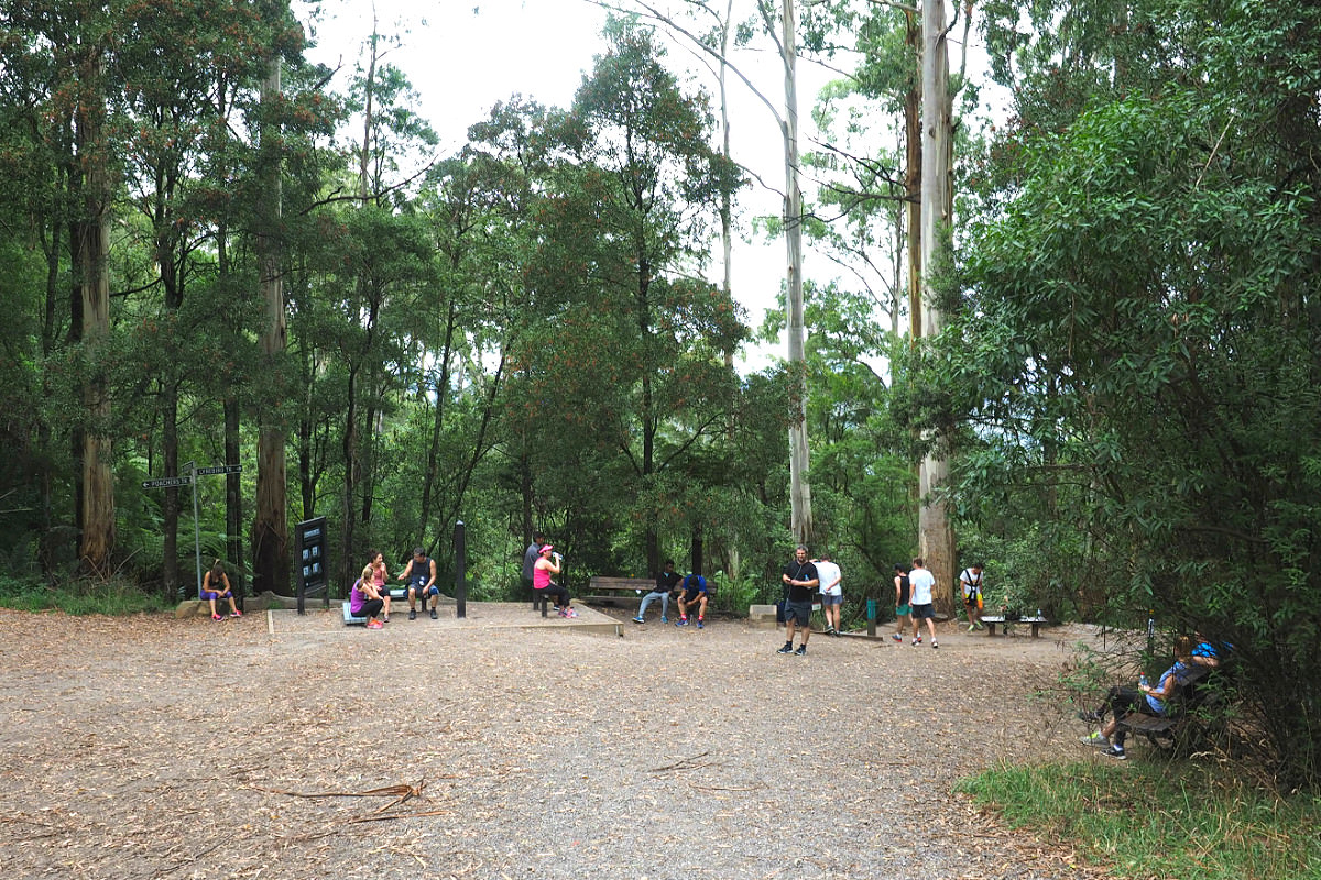 1000 Steps Dandenong Summit