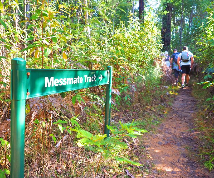 Messmate Track on Cathedral Ranges Southern Circuit hike