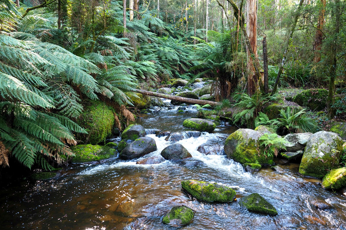 Toorongo River
