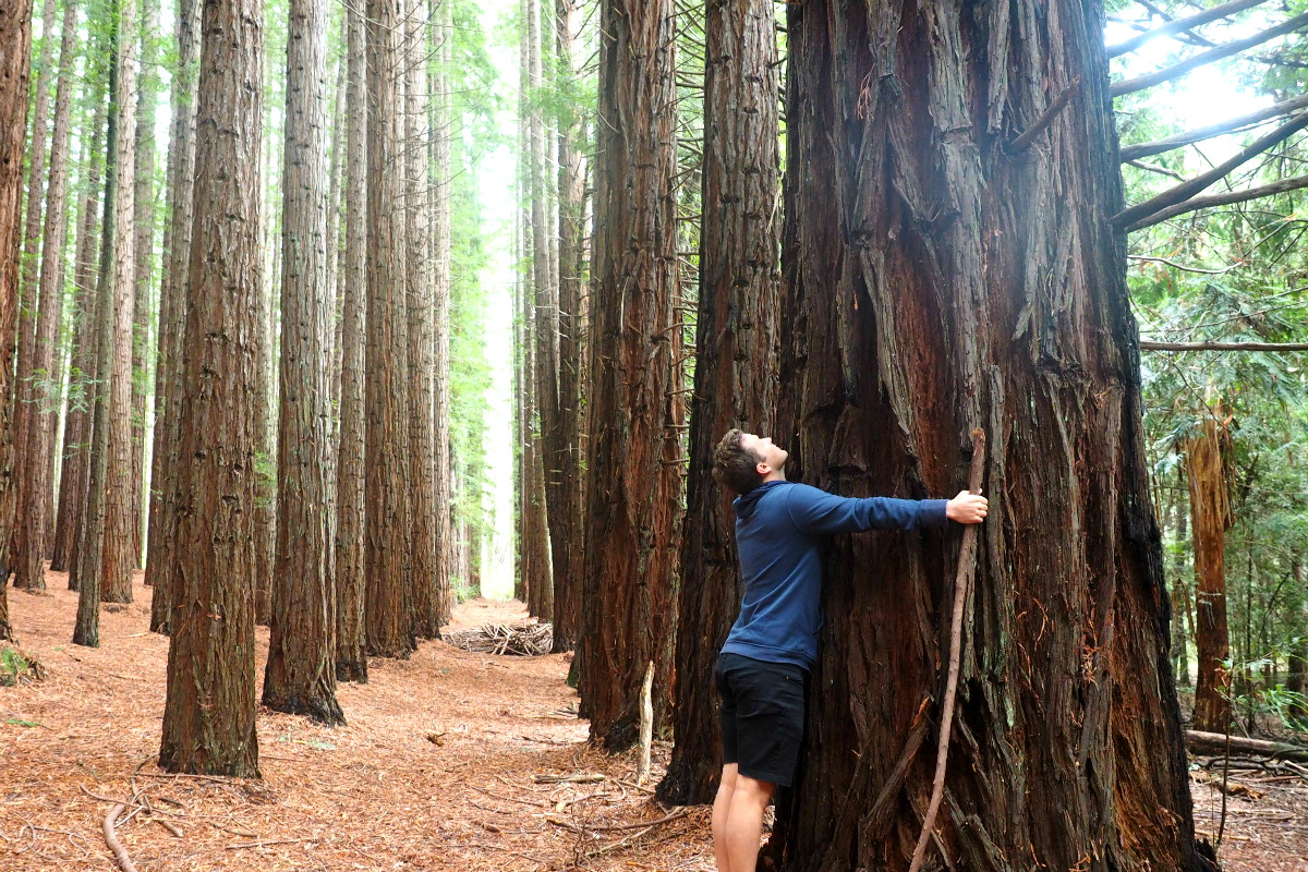 East Warburton Redwood Forest Hugs