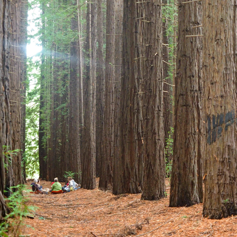 East Warburton Redwood Forest Picnics