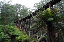 Noojee Trestle Bridge from the carpark