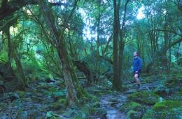 Walking to Den of Nargun along Woolshed Creek_mini